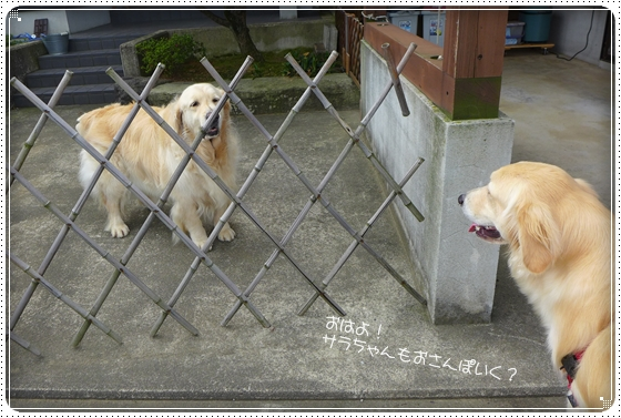 2013,7,6お散歩1