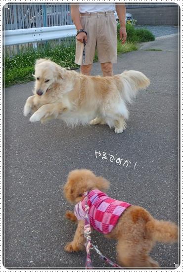 2013,7,9お散歩7