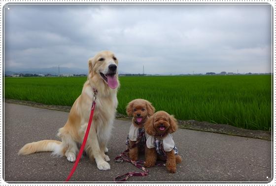 2013,7,13お散歩5