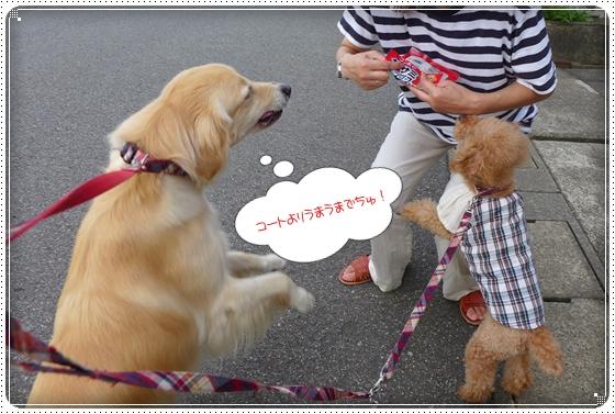 2013,7,14お散歩4