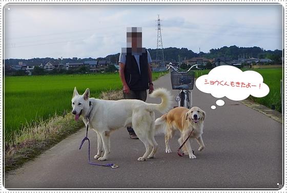 2013,7,15お散歩3