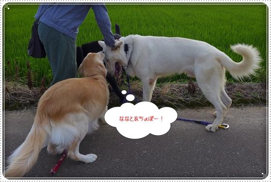 2013,7,15お散歩7