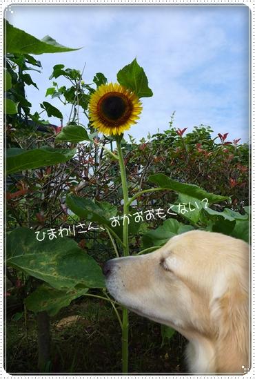 2013,7,16お散歩6