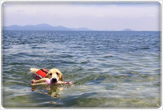 2013,7,22琵琶湖5