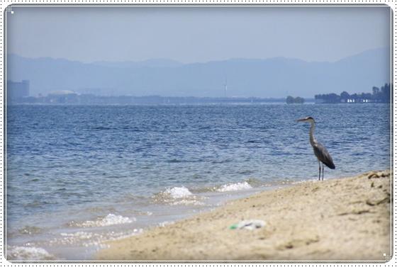 2013,7,22琵琶湖10