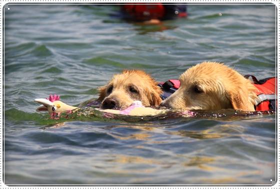 2013,7,24琵琶湖16