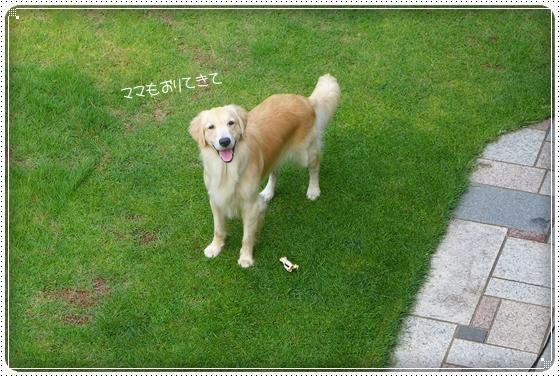 2013,7,27お庭遊び2