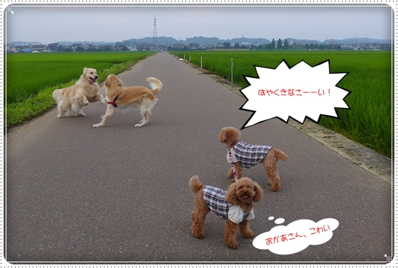 2013,7,28お散歩5