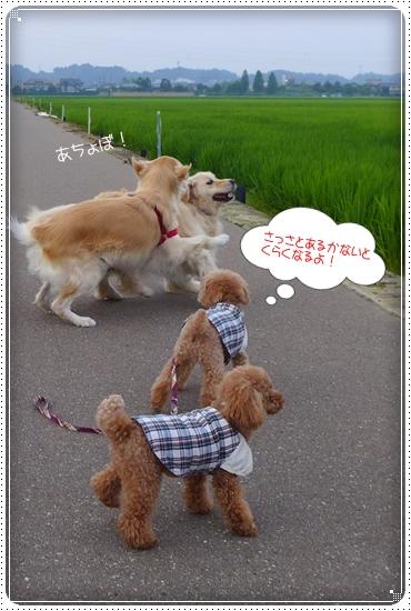 2013,7,28お散歩3