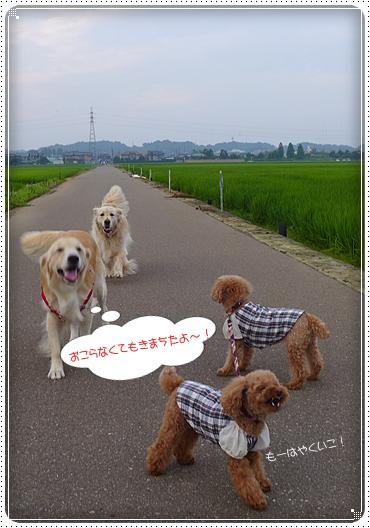 2013,7,28お散歩10