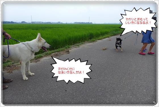 2013,7,30お散歩6
