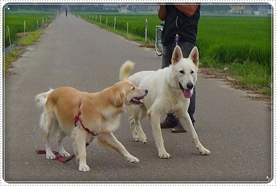2013,7,30お散歩4