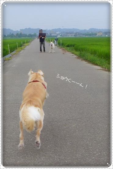 2013,7,30お散歩3