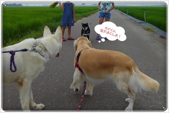 2013,7,30お散歩7