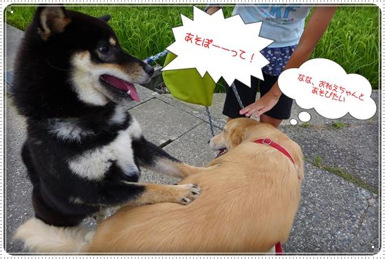 2013,7,31お散歩5