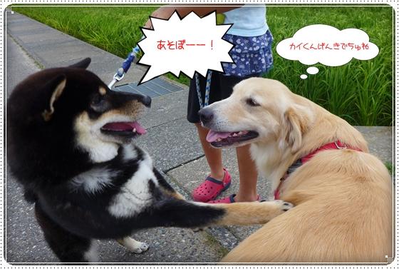 2013,7,31お散歩4
