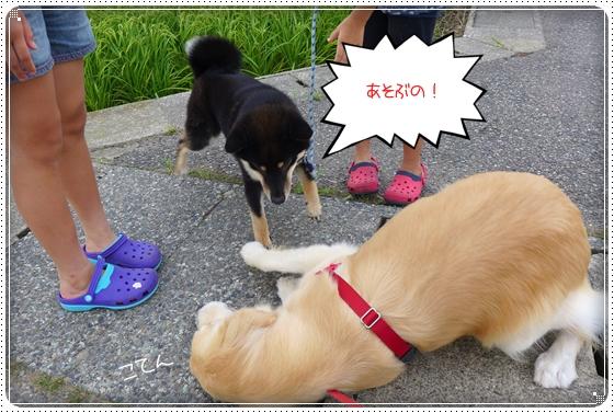 2013,7,31お散歩7