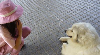 犬3_convert_20130715211726