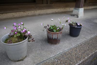 0401yukiwarisousaku.jpg