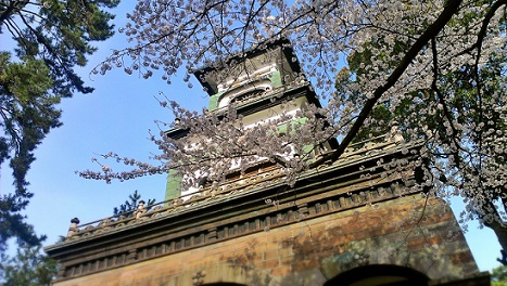 sakuraoyama.jpg