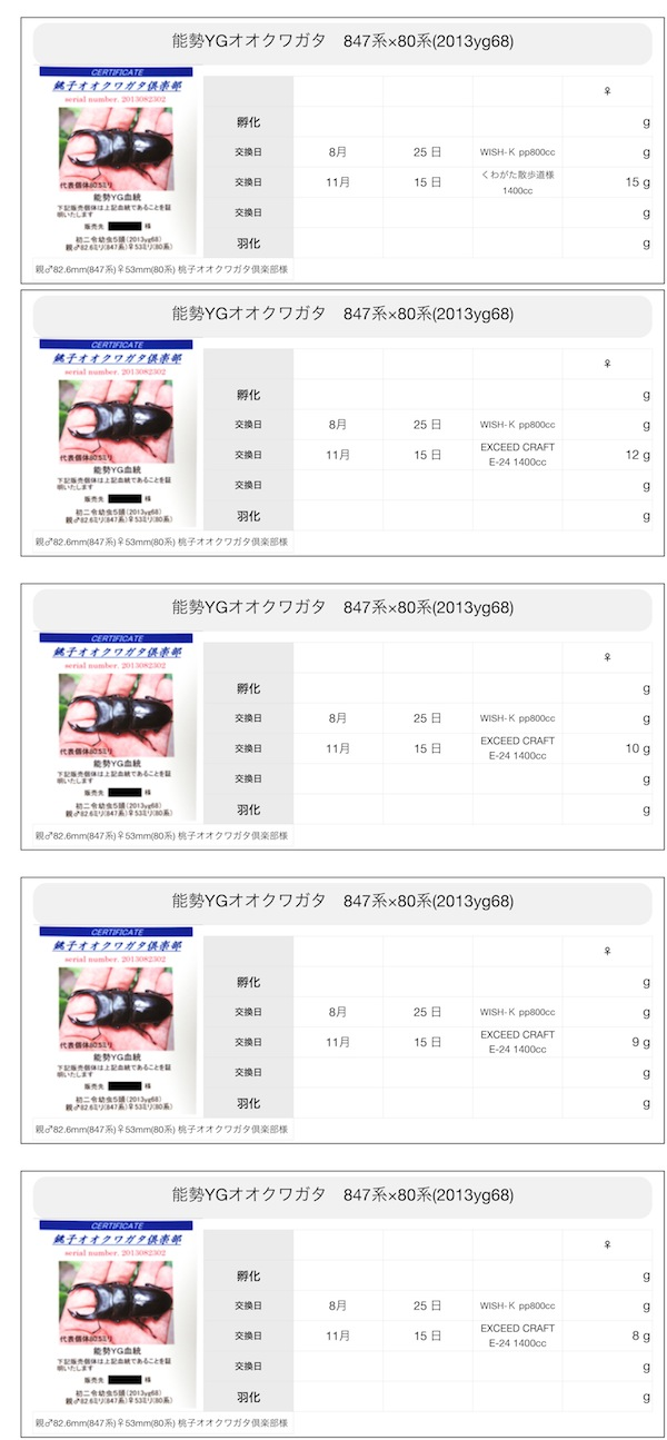 能勢YGオオクワガタ 847系×80系(2013yg68)
