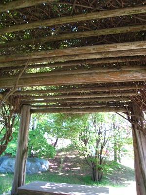 樹の東屋3