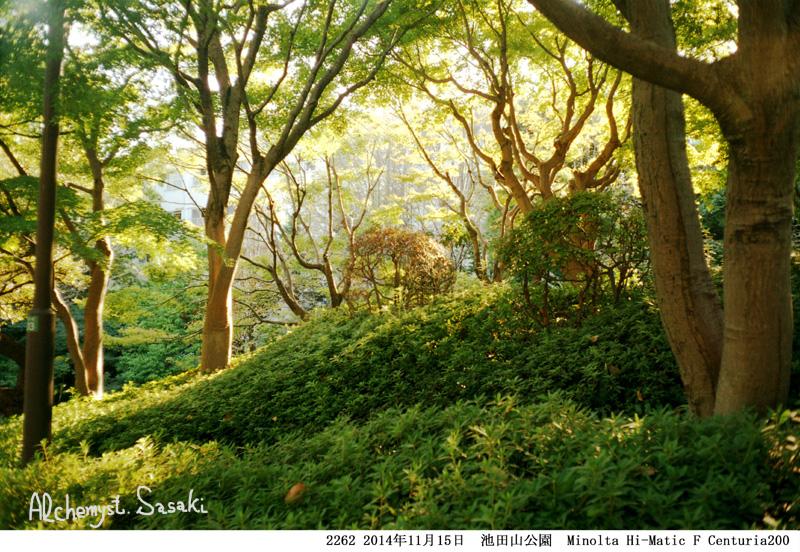 紅葉狩り散歩2262-4