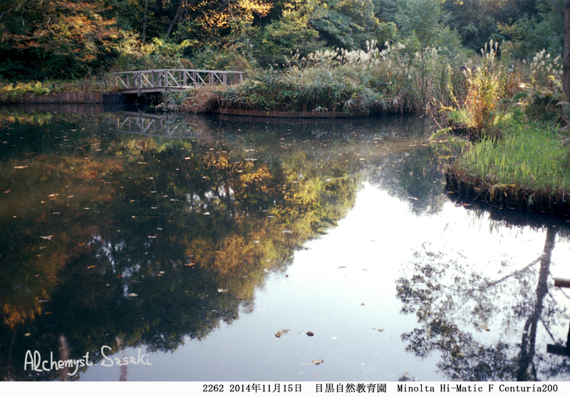 紅葉狩り散歩2262-13