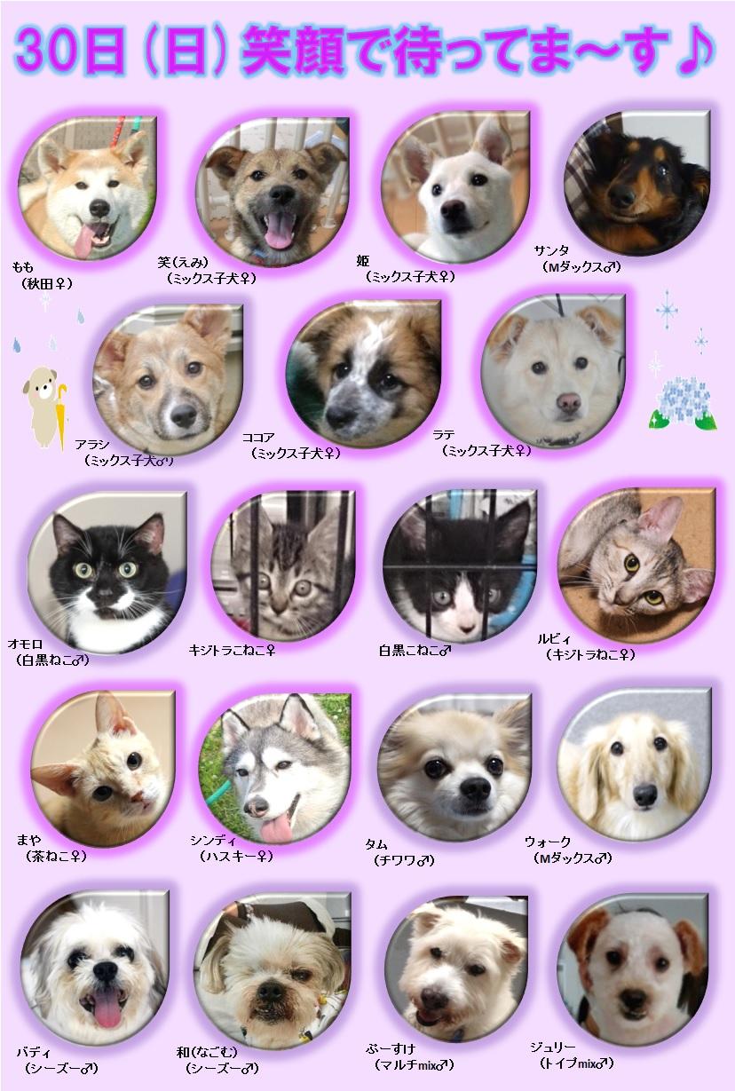 ALMA ティアハイム 6月30日 参加犬猫一覧 rev1