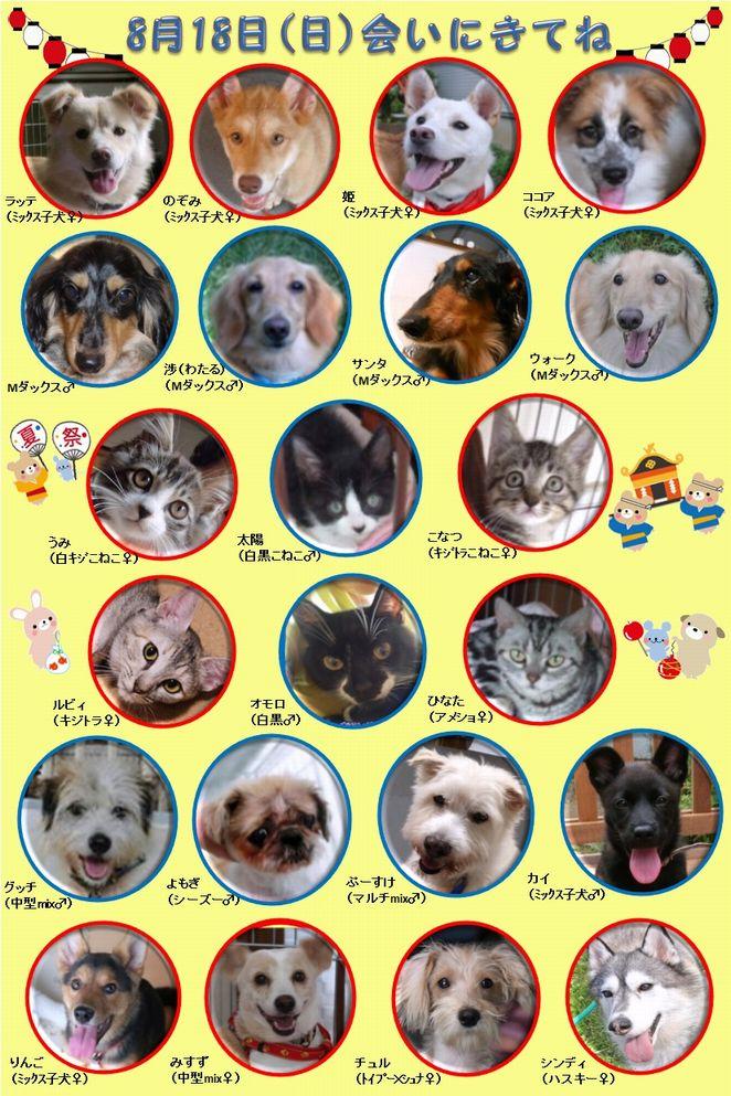 ALMA ティアハイム 8月18日 参加犬猫一覧