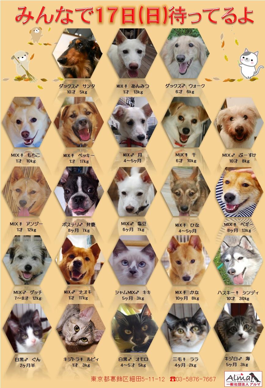 ALMA ティアハイム 11月17日 参加犬猫一覧