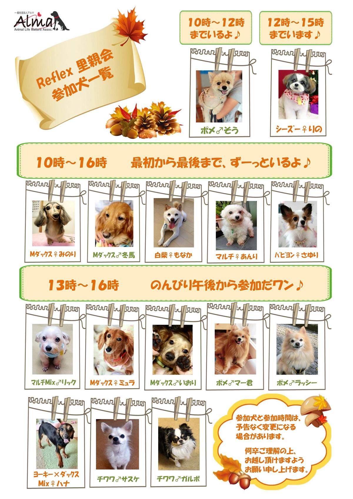 巣鴨参加犬_11_16