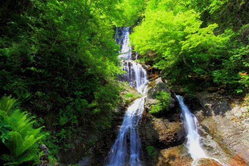 木曽の名瀑・若葉の彩る唐沢ノ滝