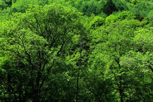 カモシカの滝の手前、緑鮮やかな木立が続く