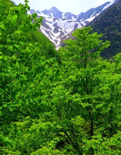 歩行区間の中間あたりから行く手の宝剣岳を望む