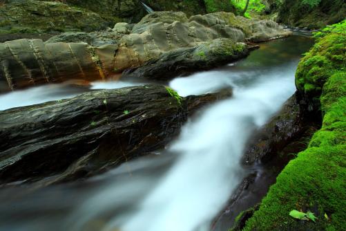横川川の蛇石