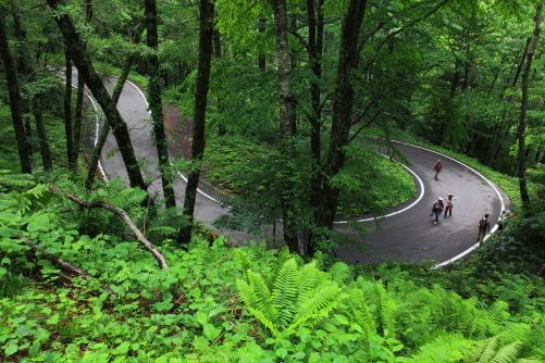 急斜面を大きく蛇行してゆるやかに車道は延びています