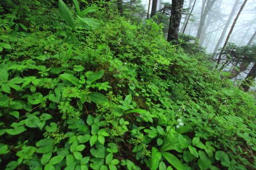 大気に水分をたっぷり含んだ森の中