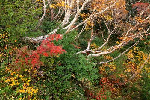 木々を彩る紅葉・御嶽山