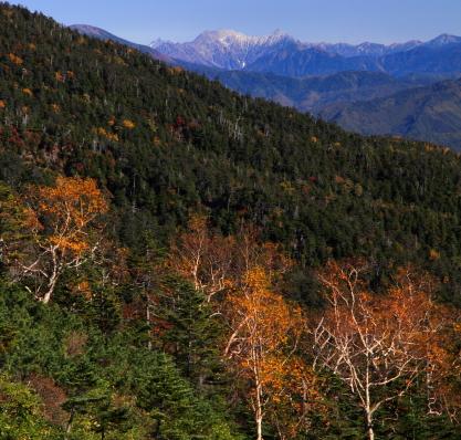 新雪の穂高岳と黄葉