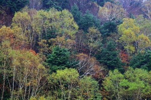 木それぞれの紅葉