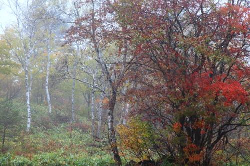 紅葉と黄葉と・一沼付近