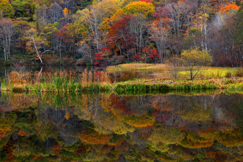 鏡池に映える紅葉