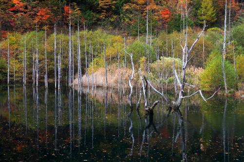 湖面に枯木と紅葉の映える