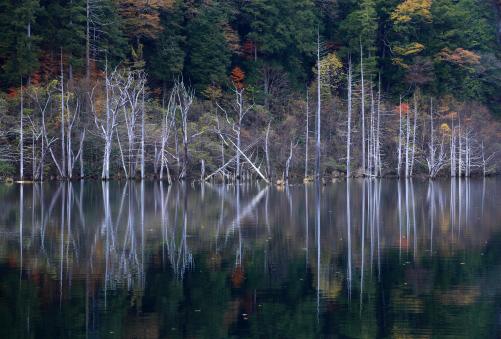枯木の木立に紅葉彩る