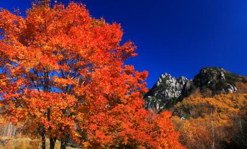 秋たけなわのミズガキ山