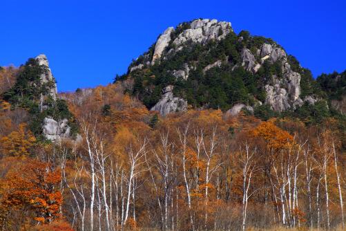 坊主岩頭とシラカバ林