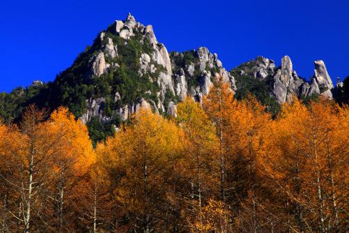 錦秋のカラマツと瑞垣山岩峰群