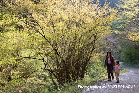130413kagenobu-2593.jpg