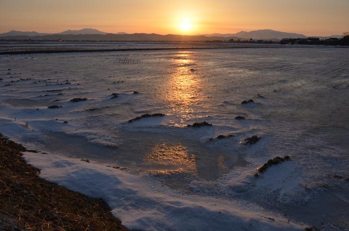朝陽 雪の田-1
